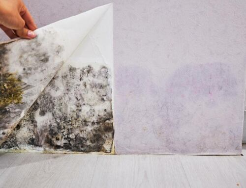 What Causes Mold? – Home and Business Environmental Solutions in Northern Virginia